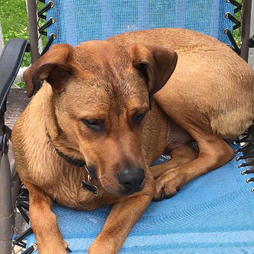 Female Doberman Puppy For Sale | Sweden