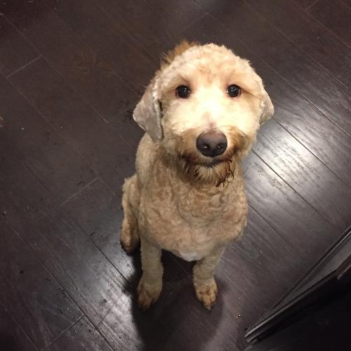 Adopt a Pet, Rehoming a Dog or Cat, Direct Pet Adoption | Get Your Pet