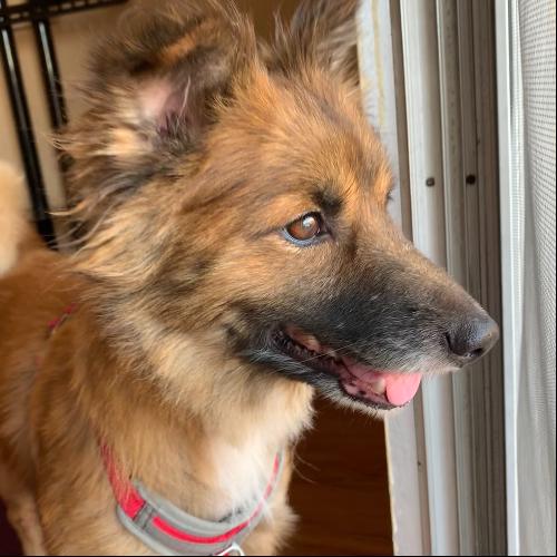Adopt a Pet, Rehoming a Dog or Cat, Direct Pet Adoption