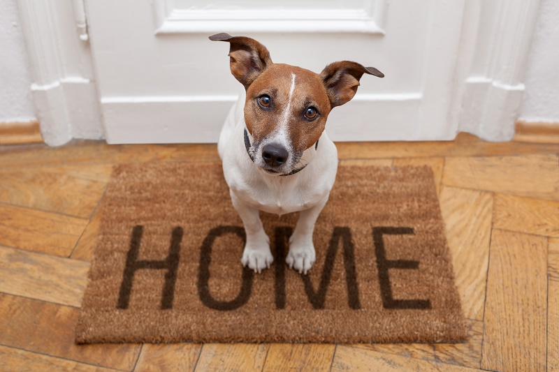Home to Home Pet Adoption Get Your Pet Online Pet Adoption Community is the future of pet adoption