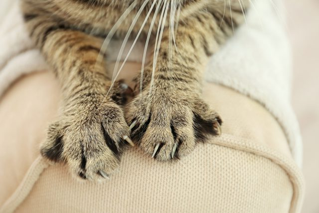 Cat Claws to Declaw or Not NJ Bans Declawing Cats Animal Welfare Get Your Pet Angela Marcus