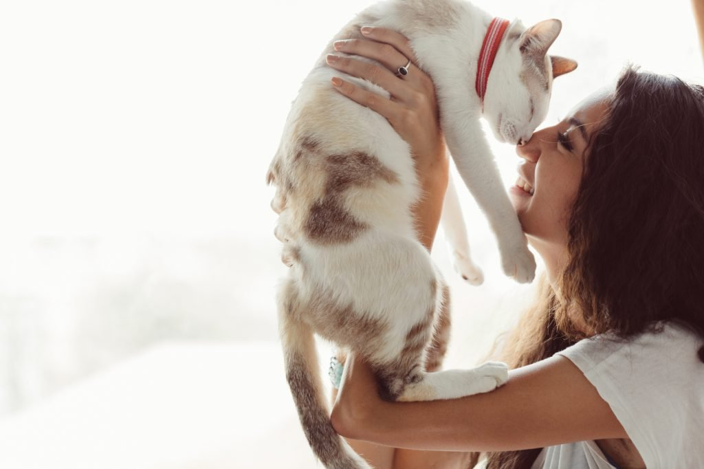 thank you for adopting an animal saving animals lives get your pet