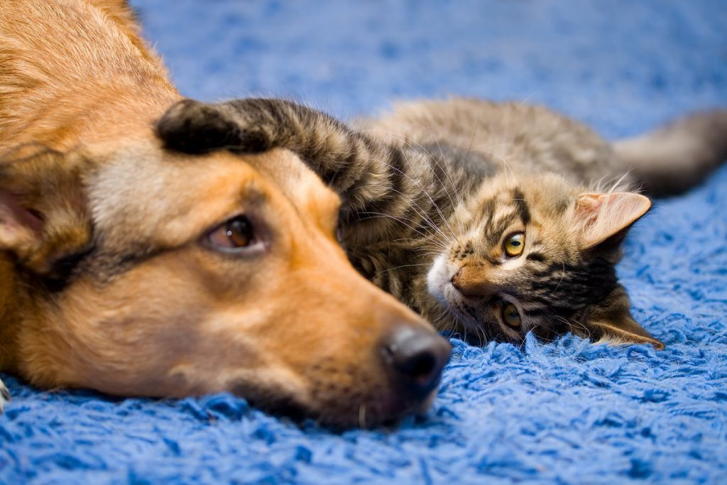 dog-and-cat-love-tabby-pet-adoption-home-to-home-philadelphia-and-delaware-valley-get-your-pet