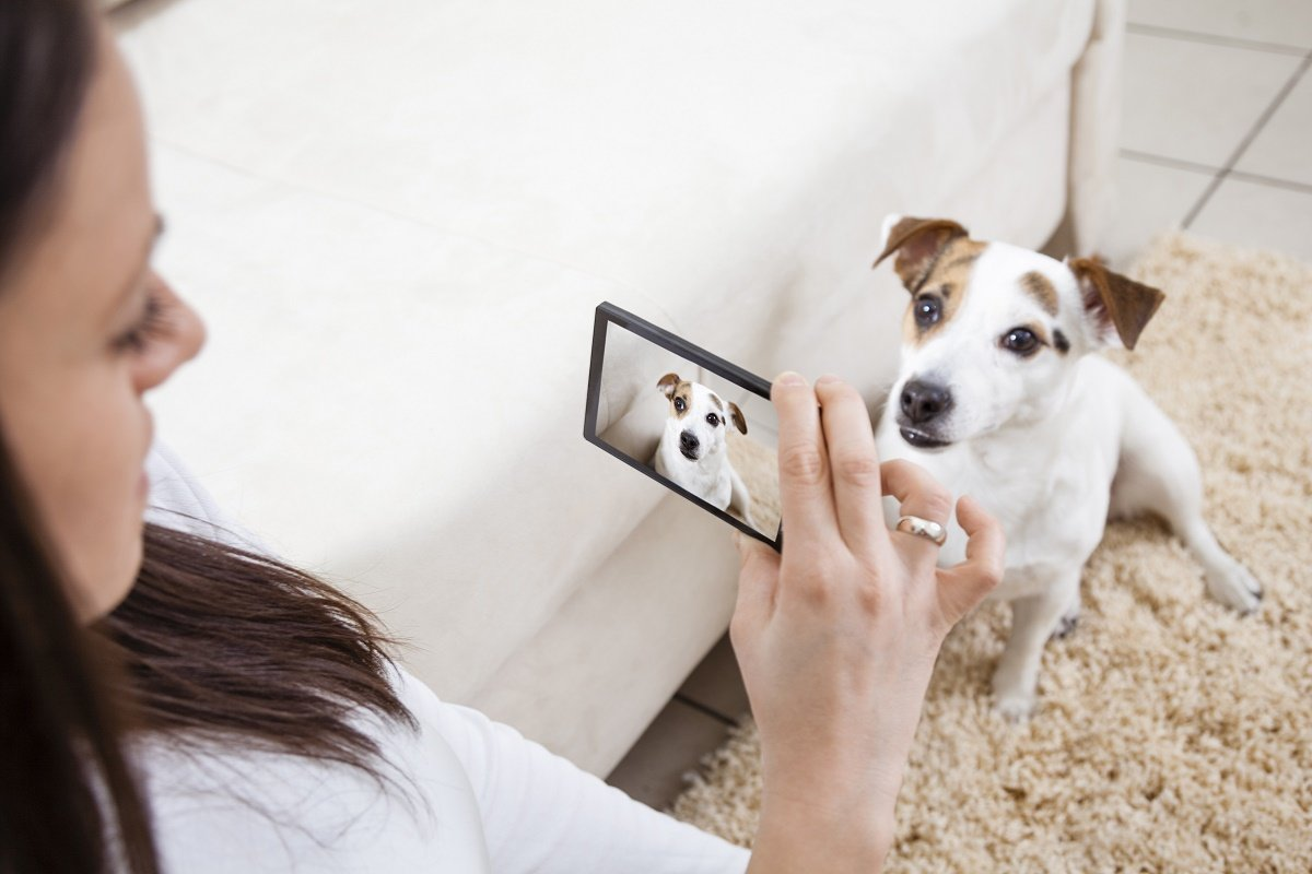 Tips for taking great photos of your pets get your pet