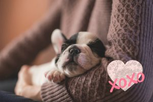 valentines day gifts for her small dogs 14 days of love