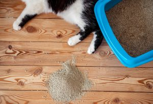 cat feet litter box