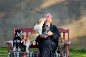 man with cat, dogs