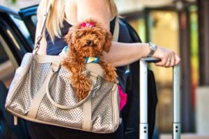 cute dog in purse