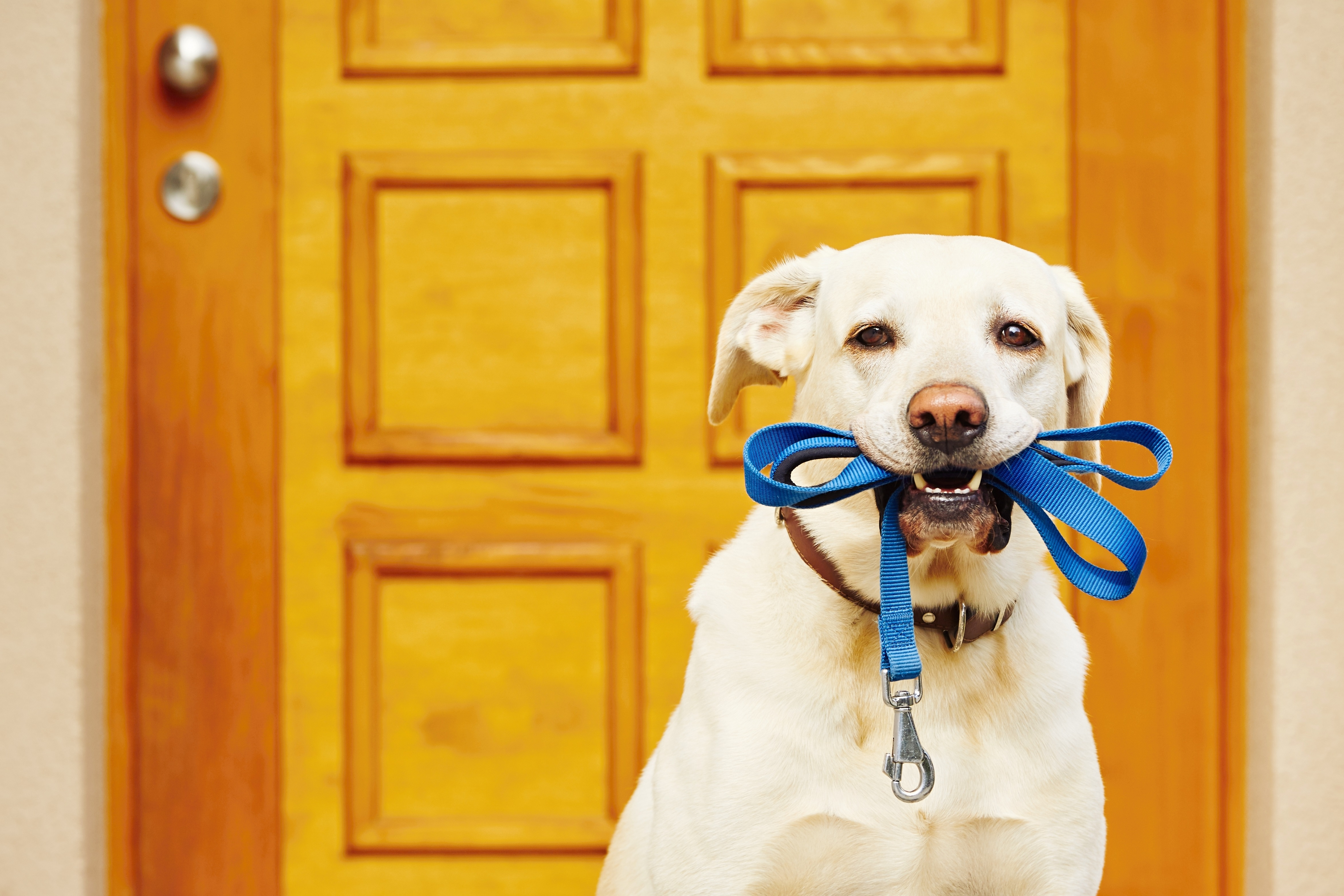 Faq How Much Exercise Should My Dog Be Getting Get Your Pet