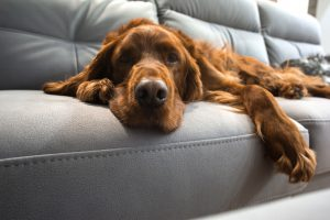 what to expect when caring for your senior pet