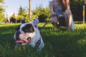 leash training your dog