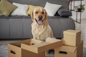 Help your pet adjust to a new home