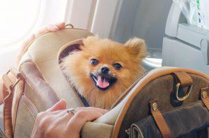 pet travel safety tips