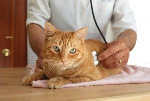 medical insurance for cats