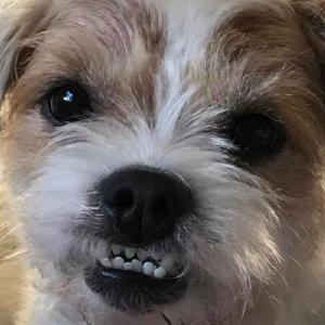 Testimonials | Get Your Pet