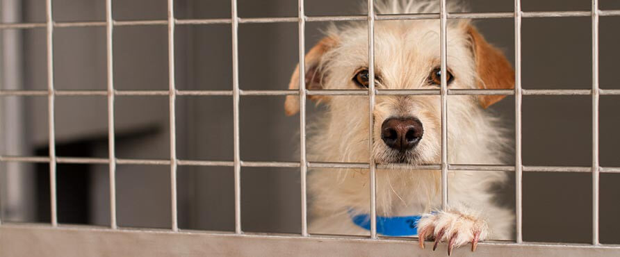 A photo of dogs surrendered to no-kill shelters